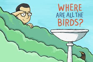 Where Are All the Birds? – Picture Book